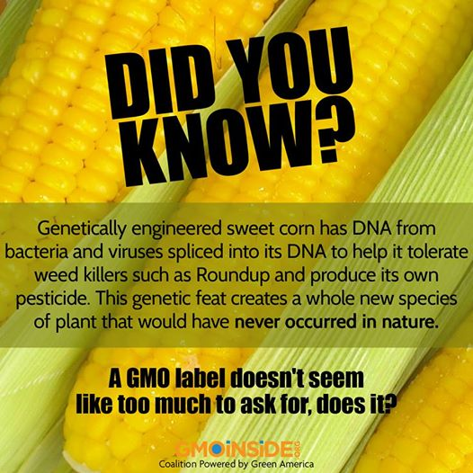Ban GMO Picture with Corn